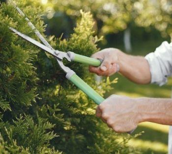 coupe des arbre master net domicile